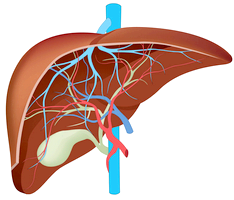 Аутоімунний гепатит, гогда головний ворог свій організм