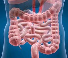 Ентероколіт - симптоми захворювання та особливості лікування