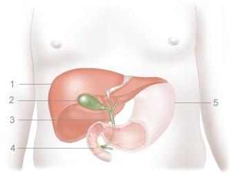 Гострий холецистит - причини, види, симптоми і лікування