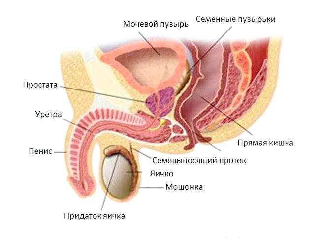 Чому з'являються тріщини в паху у чоловіків і як їх лікувати?