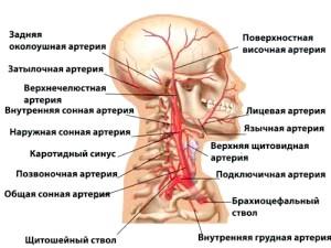 Судини головного мозк