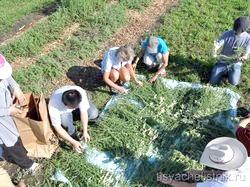Збори трав і лікарських рослин