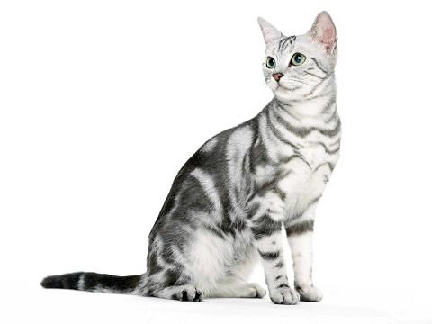 Прийом додаткових вітамінів зміцнить здоров'я кішки