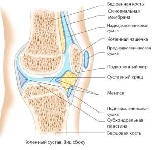 Колінній суглоб: анатомія