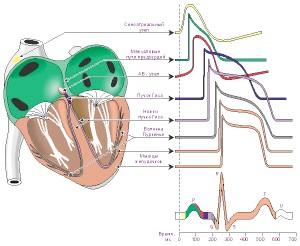 Повна поперечна и атріовентрікулярна блокада серця