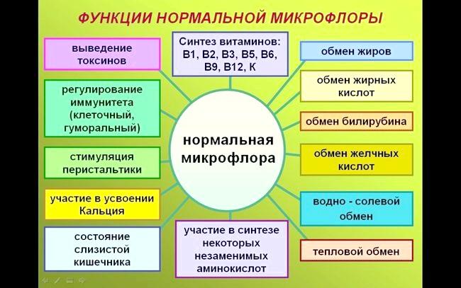 Роль мікрофлори кишечника на здоров'я людини