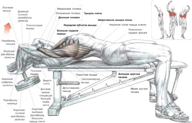 Ефективні вправи для збільшення грудних м'язів для чоловіків