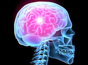 Стовбур пов'язує спинний мозок з головним