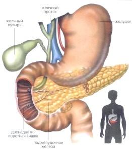 Які прояви запалення (панкреатиту) підшлункової залози?