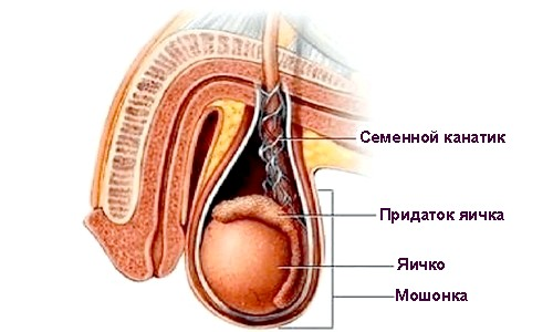 Лікування запалення сім'яного канатика і симптоми захворювання