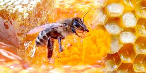 Бджолина отрута