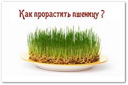 Пророщена пшениця для здоров'я